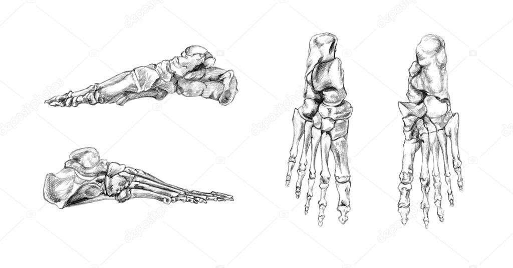 Knochen des Fußes — Stockfoto © PSArtDesignStudio #123523888