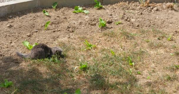 Junge Katze spielt mit der Maus