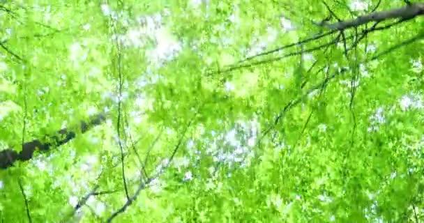 Horní části zelených stromů v lese