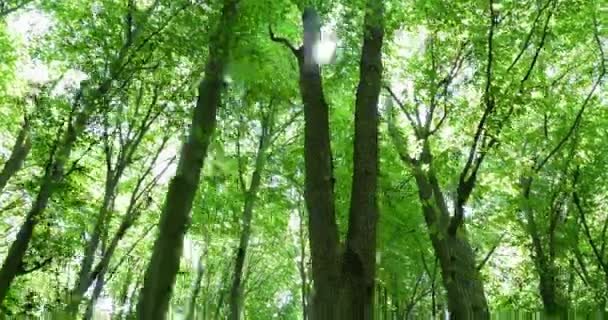 Gipfel der grünen Bäume des Waldes