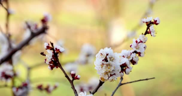 Zweig mit weißen Blüten