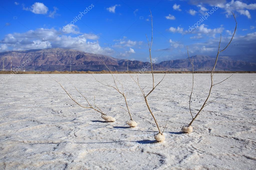 Salt från döda havet