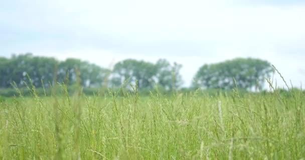 Detailní záběr zelené louky s rozostření pozadí park, jaro a léto