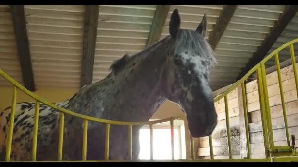 černé bílé a hnědé koně v jejich stáji