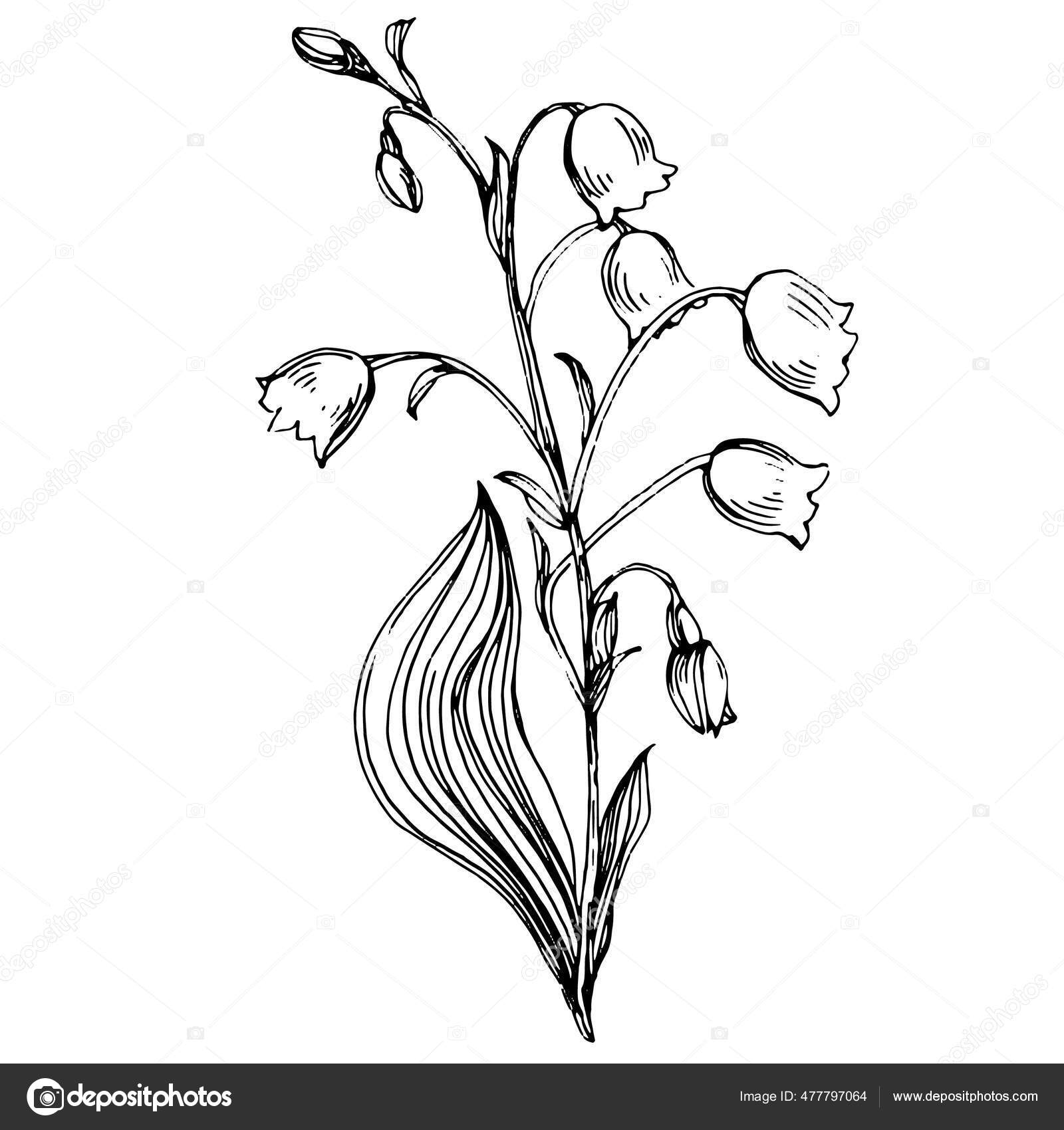Tattoo the lilies of valley Lily of