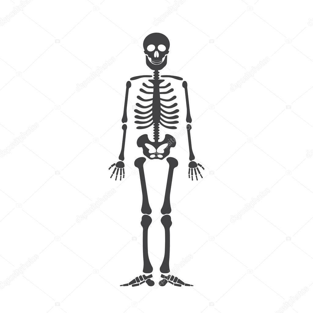 Esqueleto humano Anatomía. Vector de esqueleto de halloween negro ...