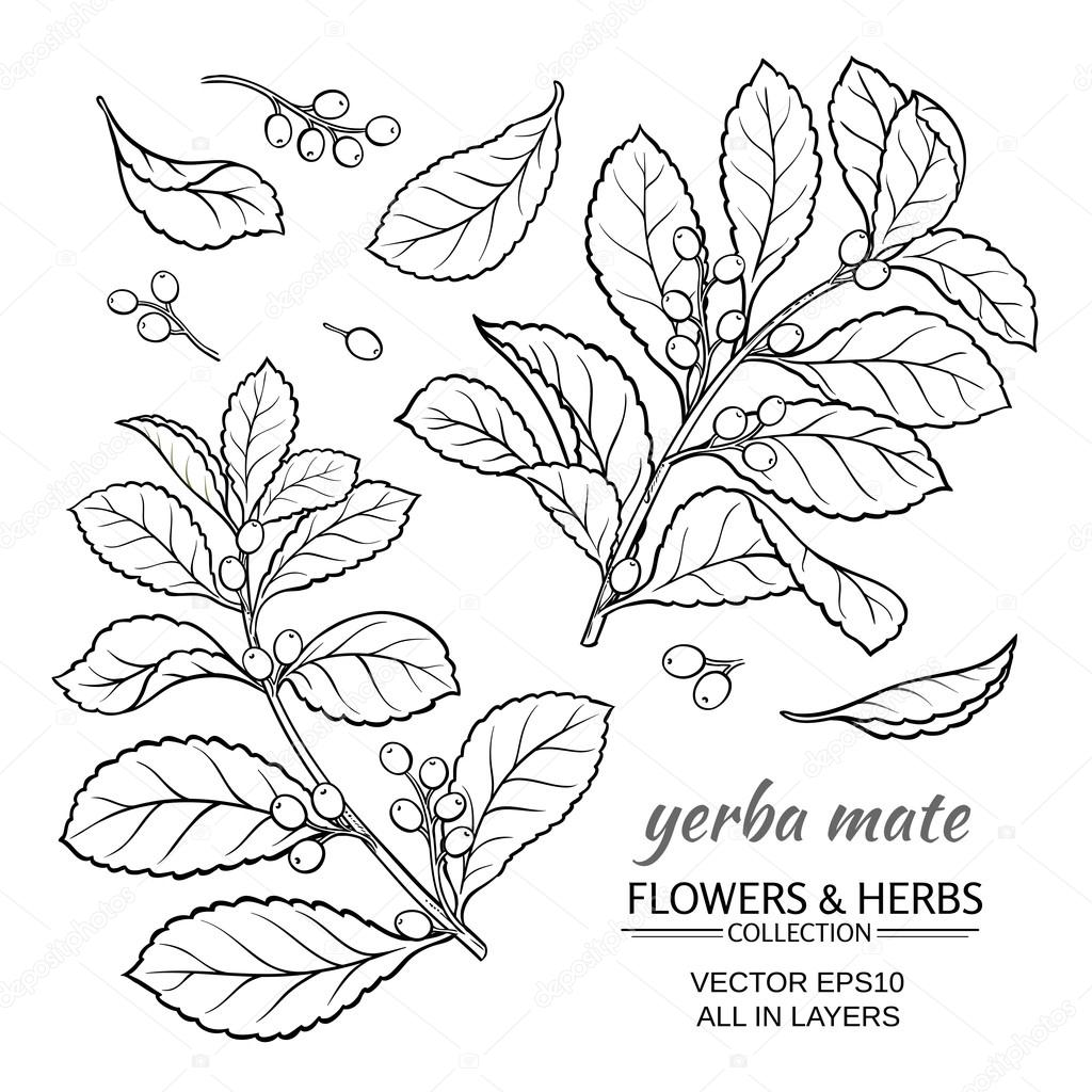 Yerba Mate Vector Set Stock Vector C Cuttlefish84 122857450