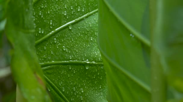 Raindrop on green leaf background