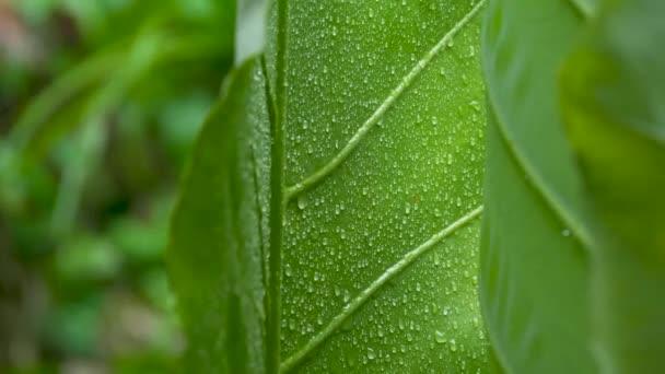 Wassertropfen auf grünem Blatt Hintergrund
