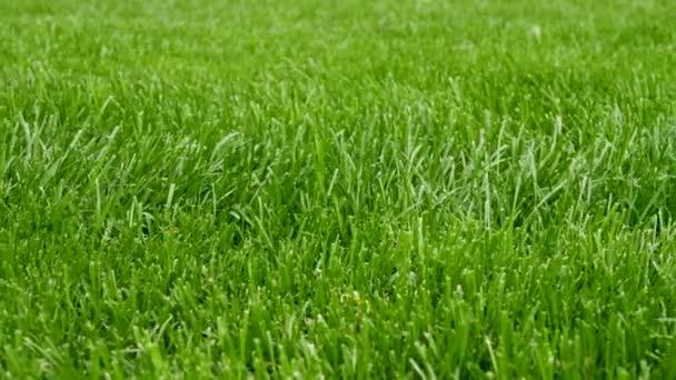 Vzor pozadí krásné zelené trávy