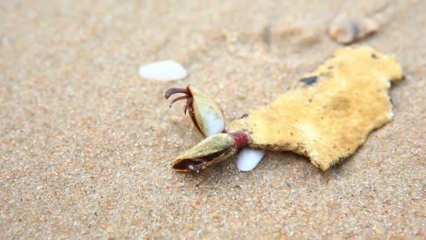 cangrejo ermitaño en la playa — Vídeos de Stock © HB511 #119770376
