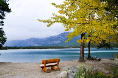 Bench and Yellow Leaves at side of Edith Lake, Canadian Rockies