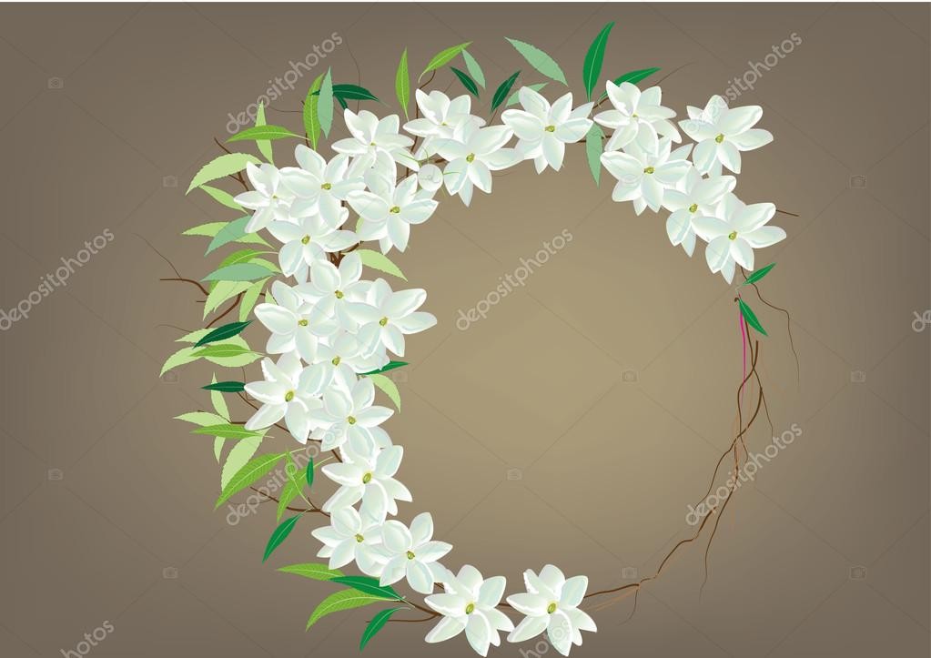 Crown jasmine flowers with leaves  top view  and side view .vector illustration