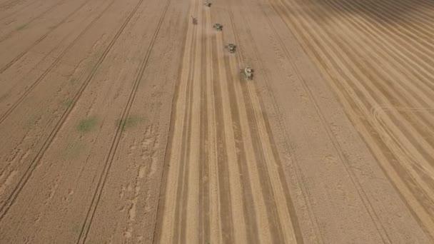 Combinare la mietitrice attraverso i campi di grano. Veduta aerea delle macchine agricole sul campo di grano. Tema industriale e agricolo
