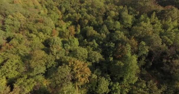 Riprese aeree drone, volo sopra il verde e bellissimi alberi alle foreste europee. interminabili foreste e deserto. Ecologia e tema ambientale. Cambiamento delle stagioni