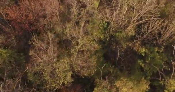 Letecká detail stromy listy a větve v lese na podzim