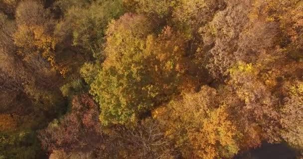 Podzimní stromy v lese, nákladní automobil plný dřeva. Pohádková krajina podzimu - lesních stromů mění barvy. Multi barevné přírody letecké drone scéně