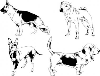 Vector drawings sketches pedigree dogs and cats  drawn in ink by hand , objects with no background icon
