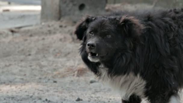 Starý, nemocný pes štěká