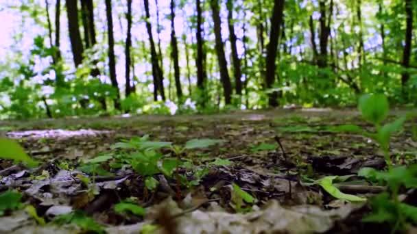 Lesní pěšina v létě