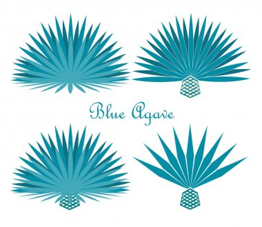 Blue Agave Premium Vector Download For Commercial Use Format Eps Cdr Ai Svg Vector Illustration Graphic Art Design