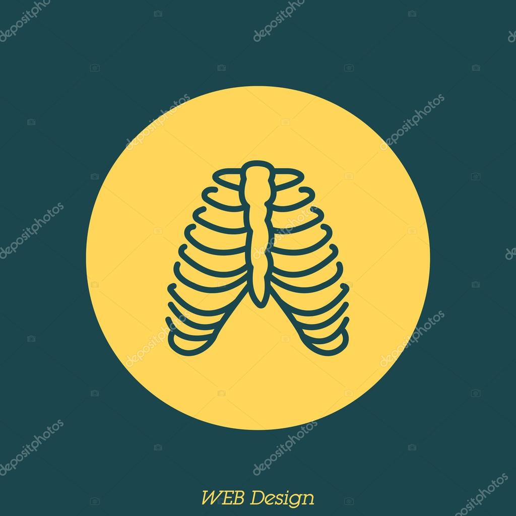 huesos humanos, costillas — Vector de stock © PPVector #120414546