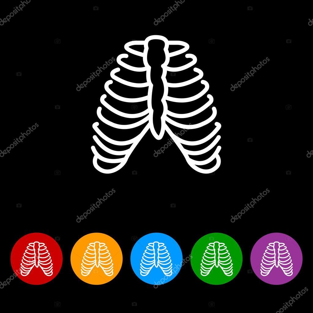 huesos humanos, costillas — Archivo Imágenes Vectoriales © PPVector ...