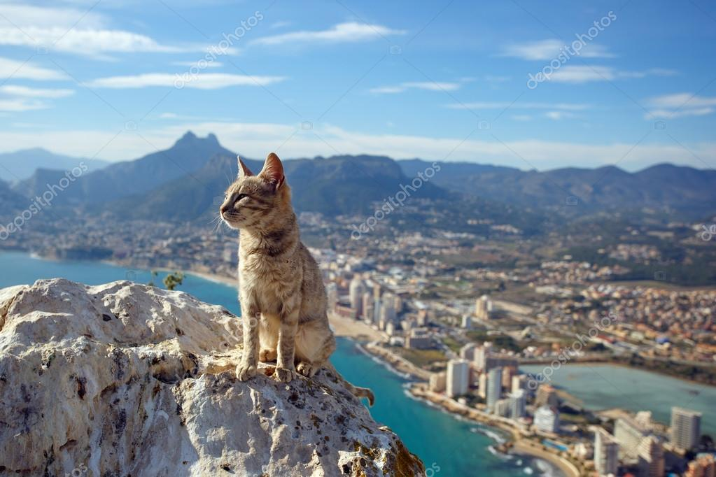 The cat on the top of the hill