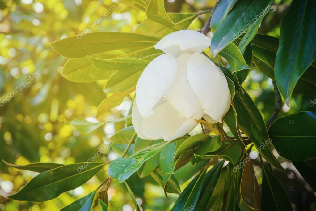 Цветок с желто зелеными листьями 2