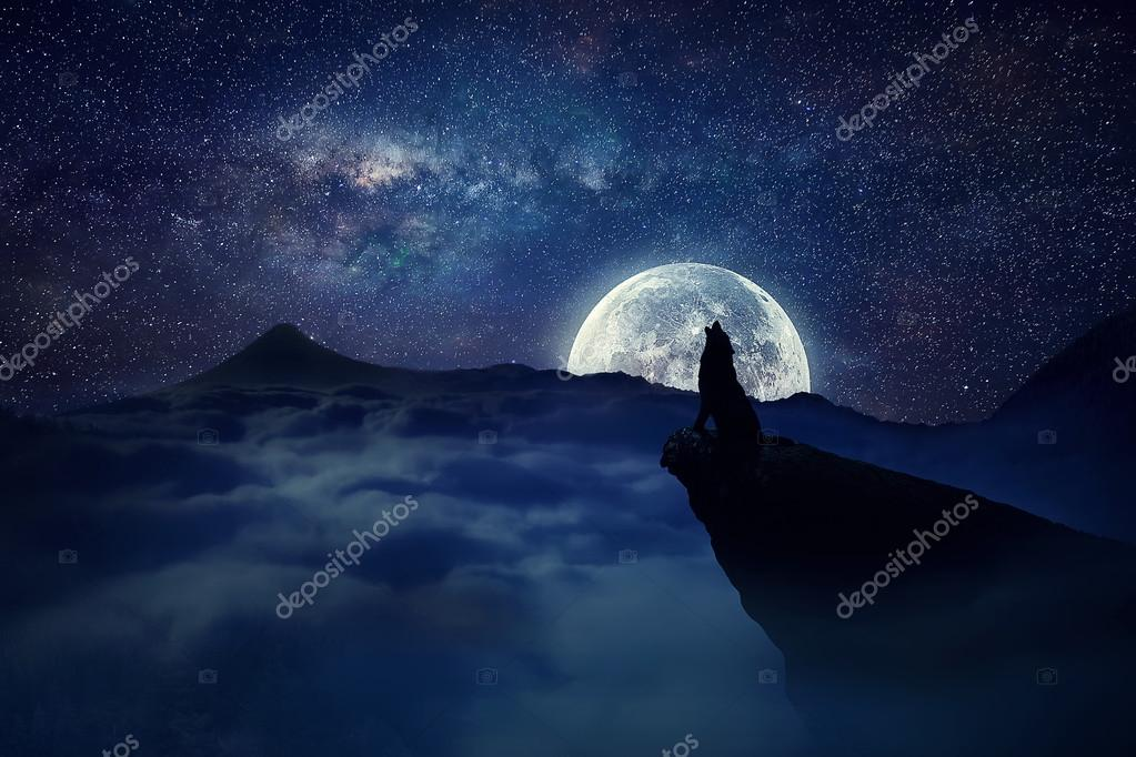 lonely wolf moonlight