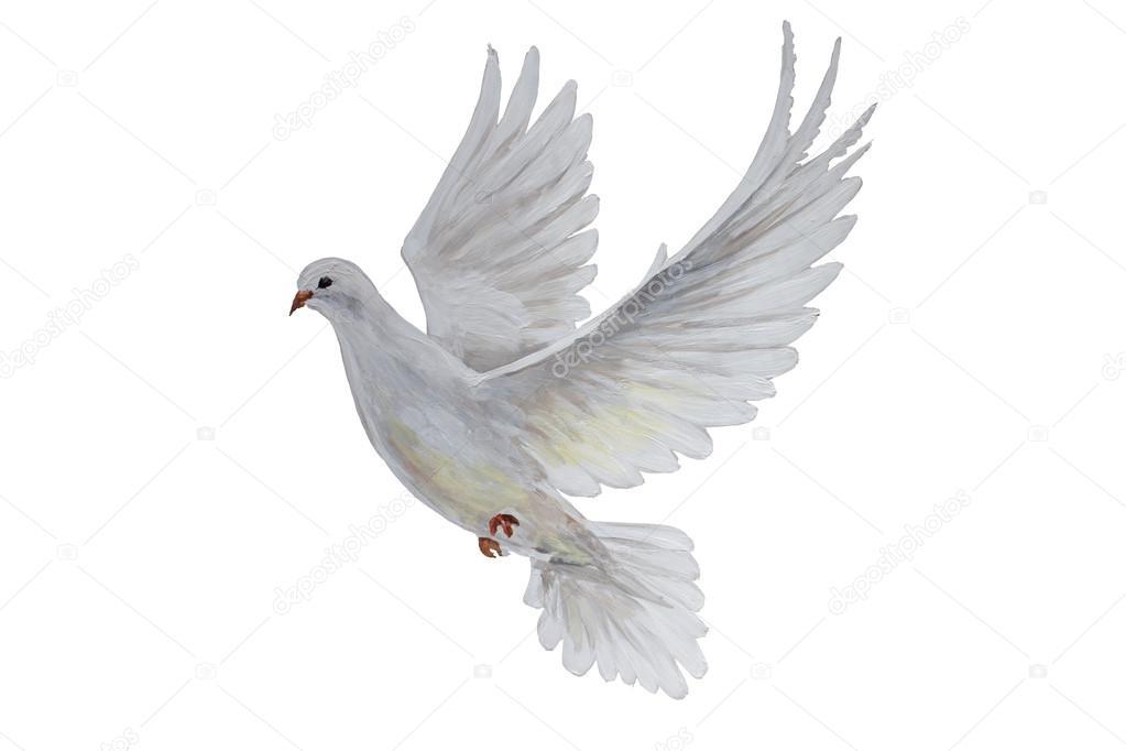Foto Paloma Volando Una Paloma Blanca Volando Gratis Foto De