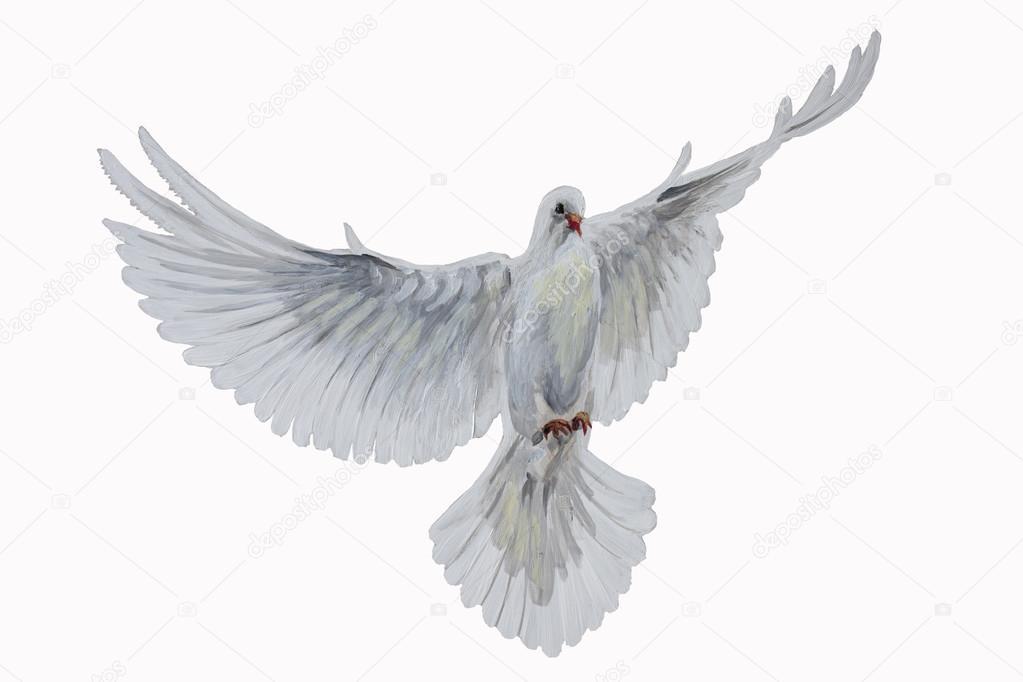 Paloma Blanca De Frente Dibujo Una Paloma Blanca Volando Gratis