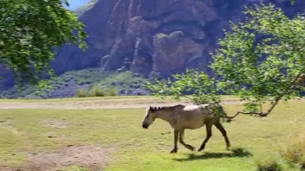 between trees in the mountains walking horse