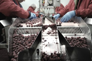 people in gloves picking out raspberries