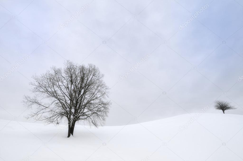 trees in winter snowy hills