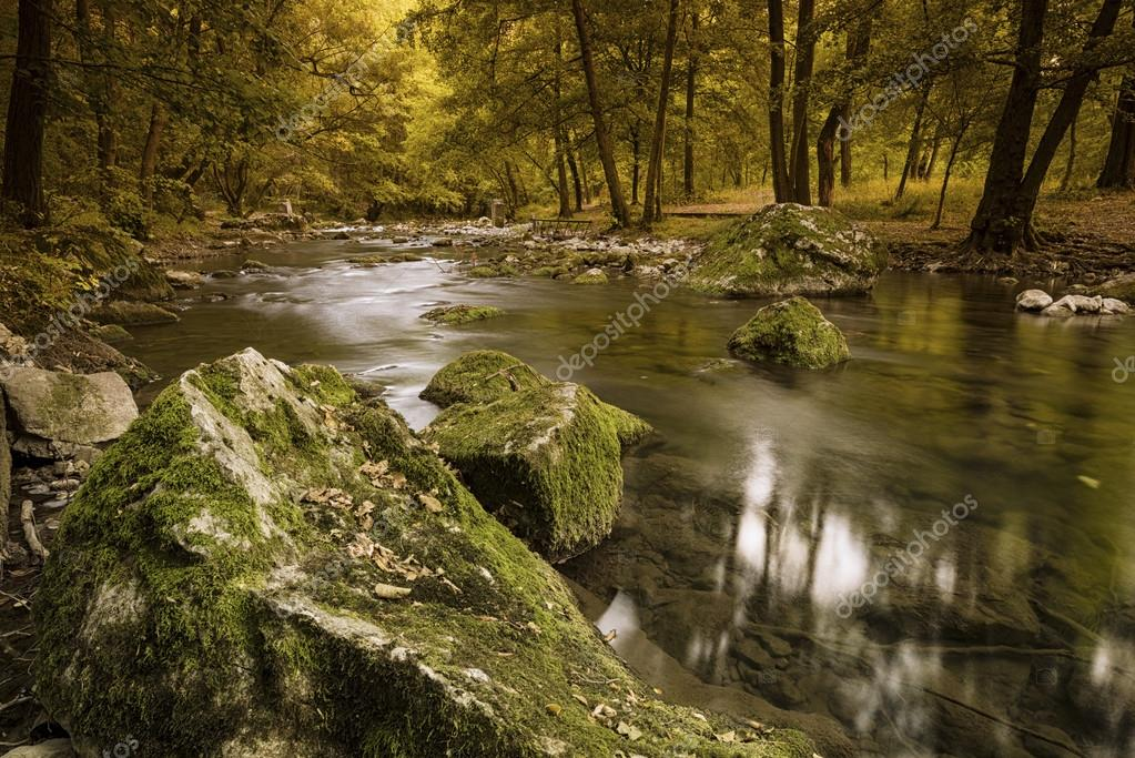 calm river in autumn forest