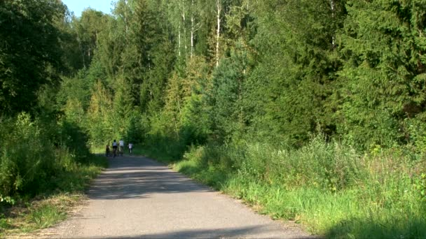 Family rides on a bicycle on the road in the summer forest