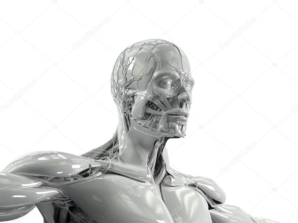 Anatomía humana cara y torso de porcelana acabado — Foto de stock ...