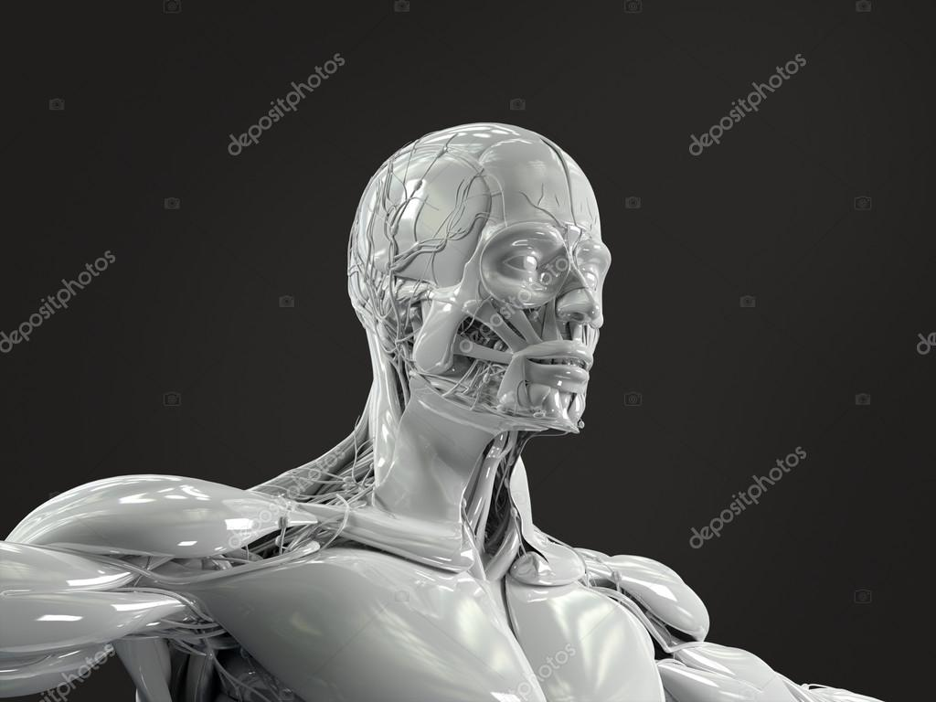 Human Anatomy Face And Torso In Porcelain Finish Stock Photo