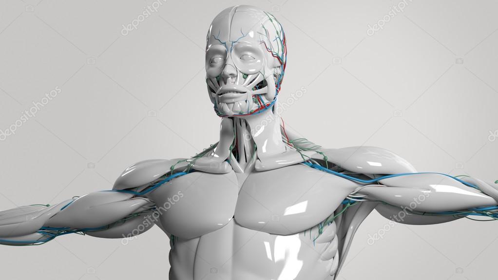 Menschliche Anatomie Gesicht und Oberkörper in Porzellan zu beenden ...