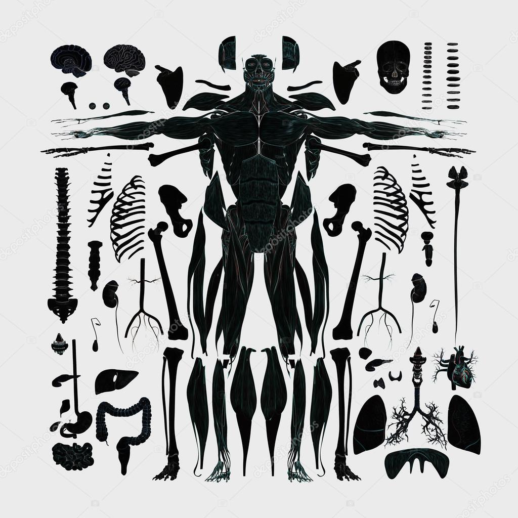 Anatomía humana plana colocar la ilustración de las partes del ...