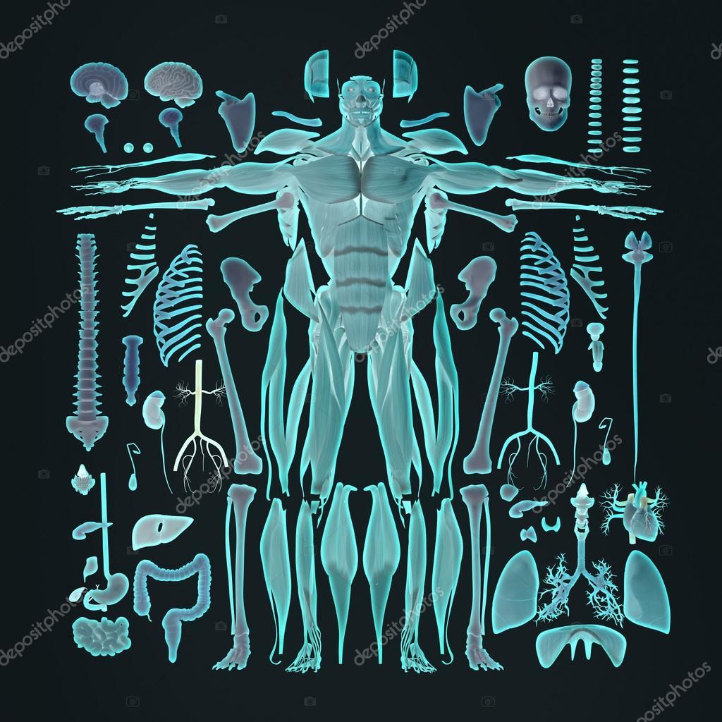 Menschliche Anatomie flache Abbildung von Körperteilen zu legen ...