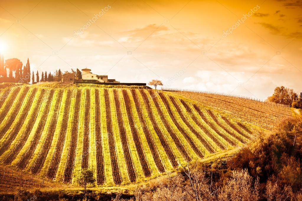 Beautiful green vineyard landscape