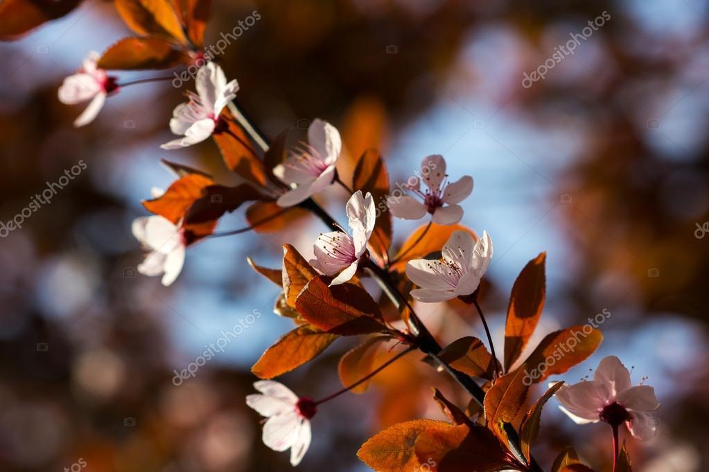 Garden spring blues