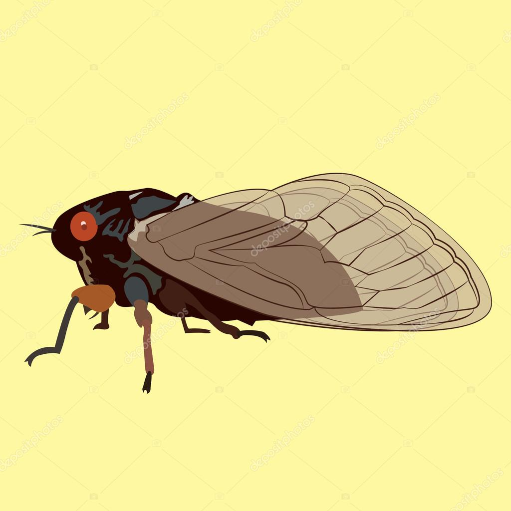 Vector Image of a 17 Year Cicada