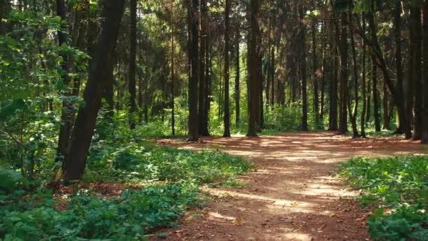 Procházka lesem
