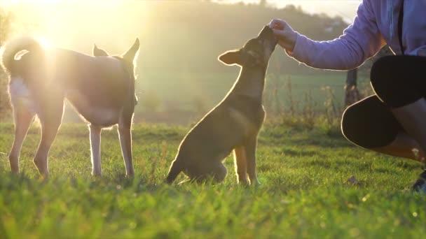 Hundetraining. Gehorsamstraining. Kleiner Welpe und großer Hund beim Training. Zeitlupe