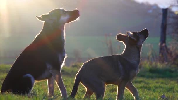 Hundetraining. Der Welpe lernt das Kommando