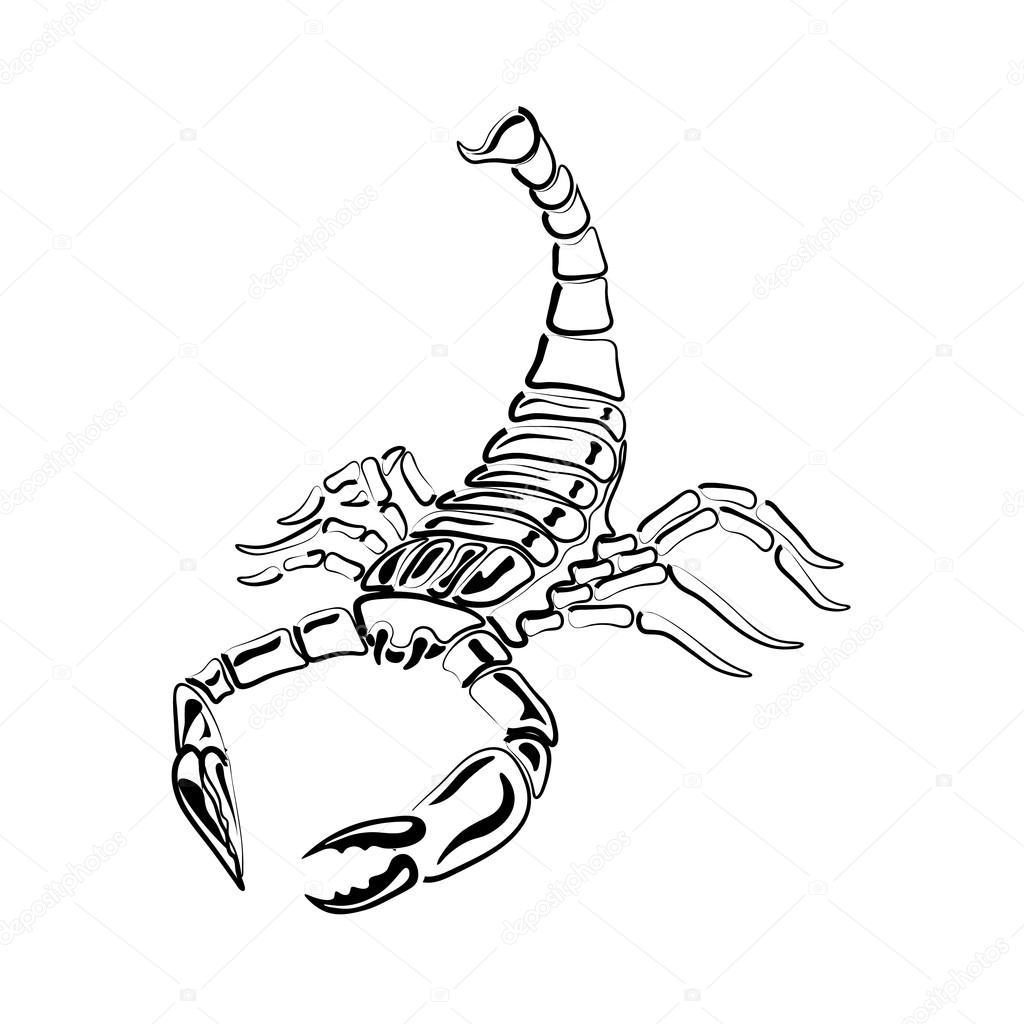 Scorpion Czarno Białe Do Tatuaży Znak Zodiaku Grafika