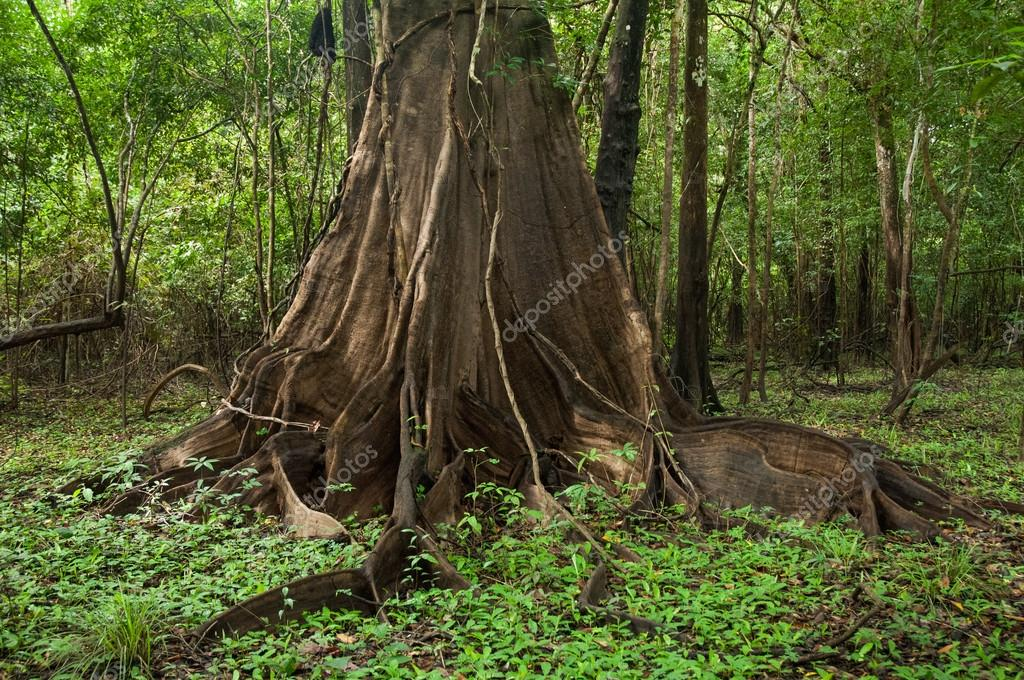 rainforest, Sustainable development reserve